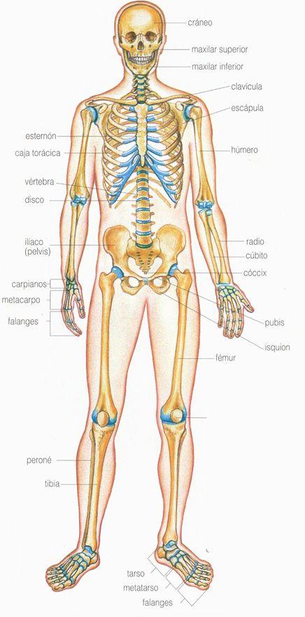 articulaciones | body | Pinterest | Salud y Ejercicios