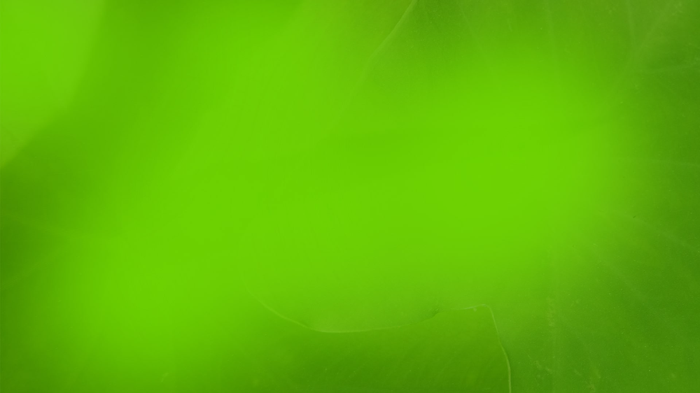 Green Background With Green Lighting Effects Green Backgrounds Background Solid Color Backgrounds