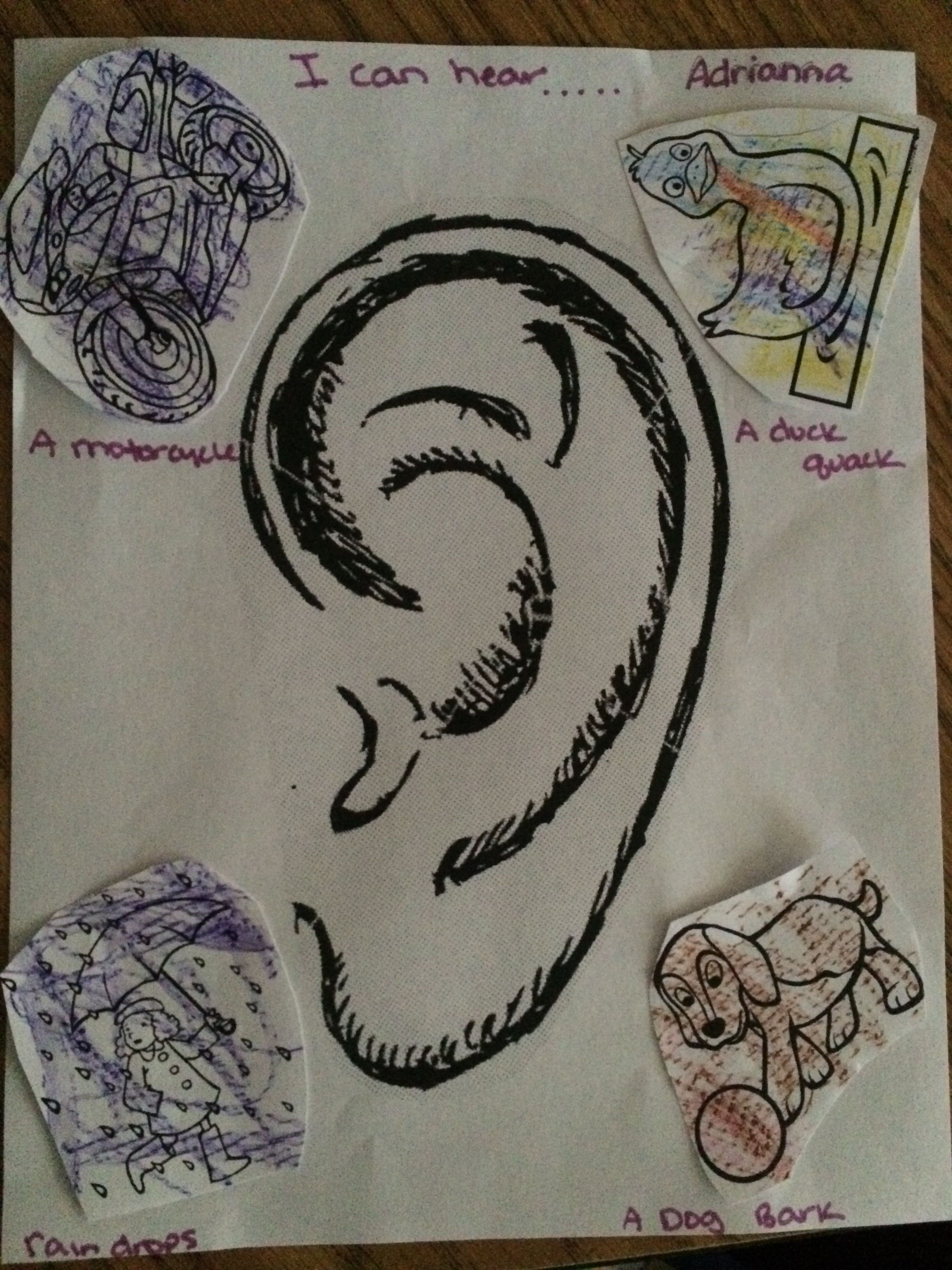 5 Senses Hearing