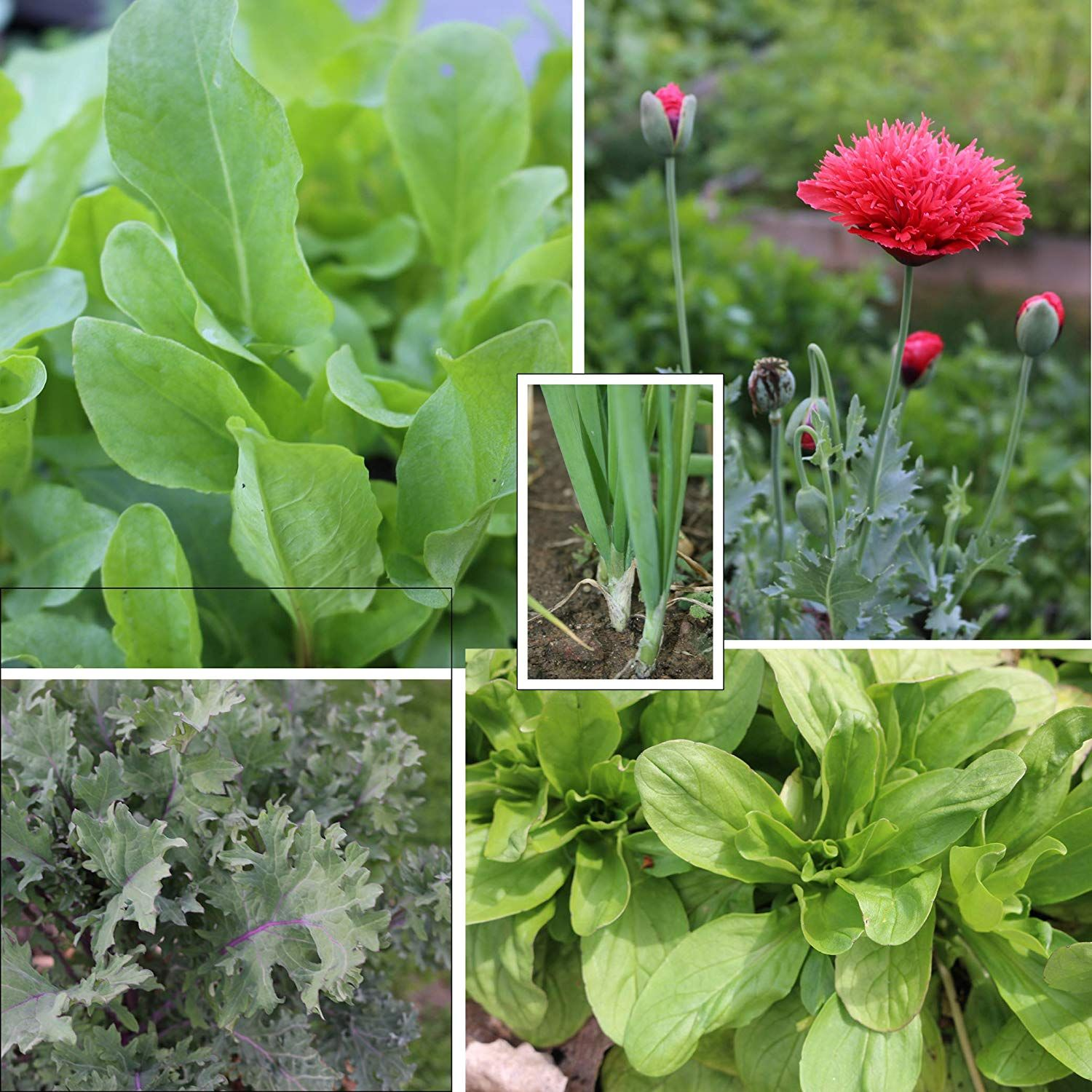 Did You Know You Can Plant #vegetables In The Fall, They