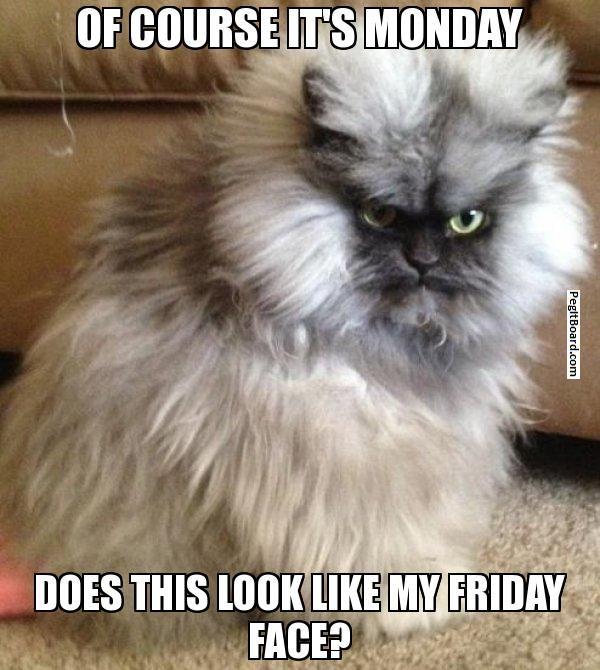 Persian cat meme maker
