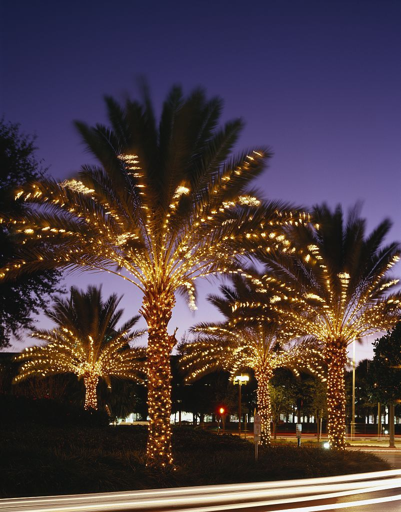 Ly Lights On The Palm Trees At Orlando S Peabody Hotel