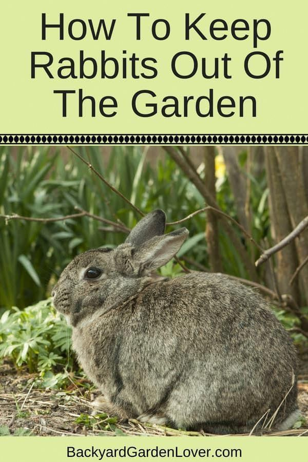 Learn how to keep rabbits out of the garden and keep your ...