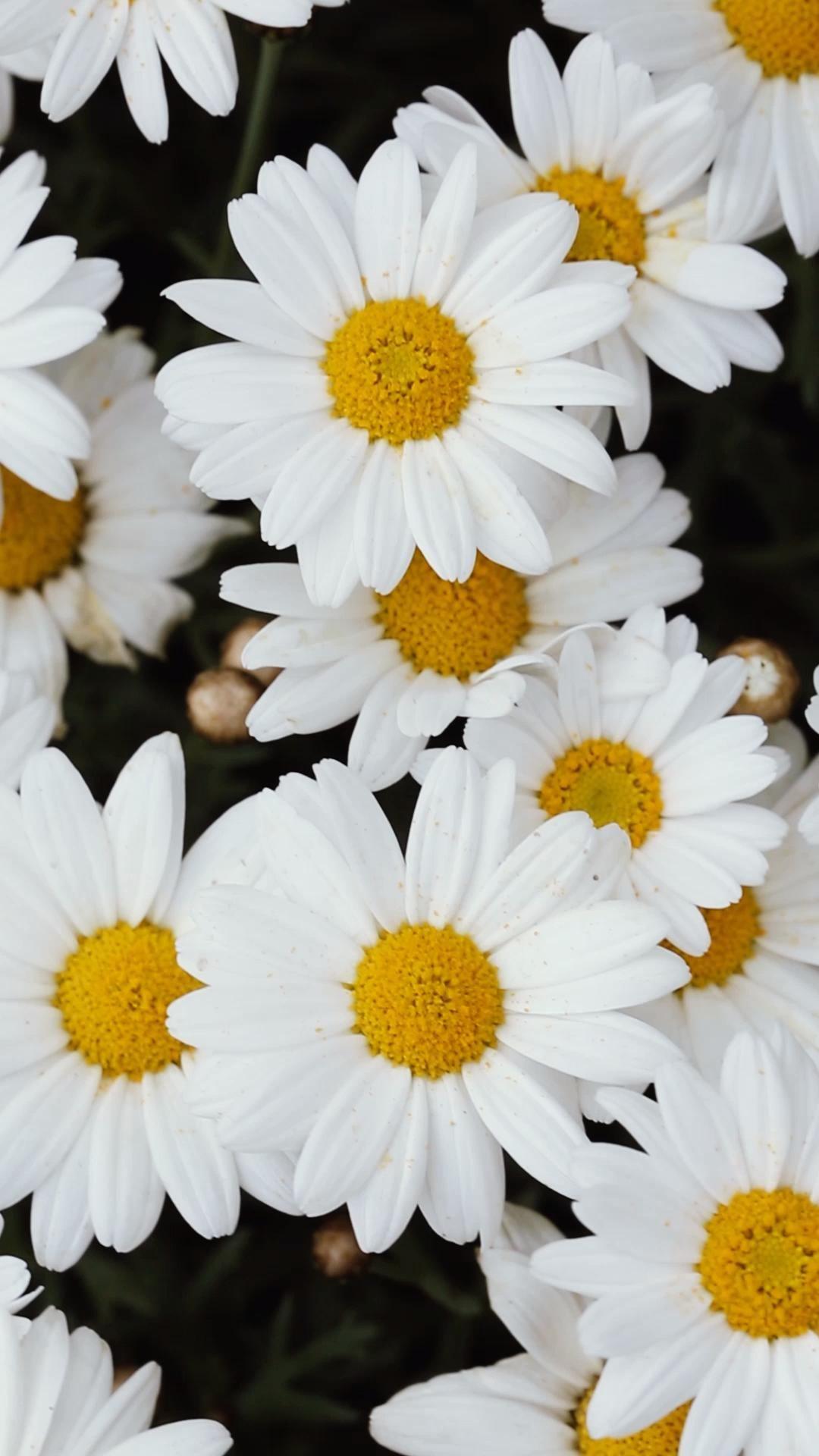 Fleurs de printemps - La nature s'installe dans votre jardin