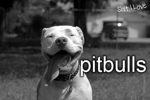Pitbulls.