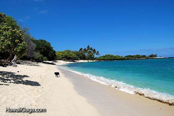 Kekaha Kai Beach Park Hawaii Beaches Island Beach Big Island