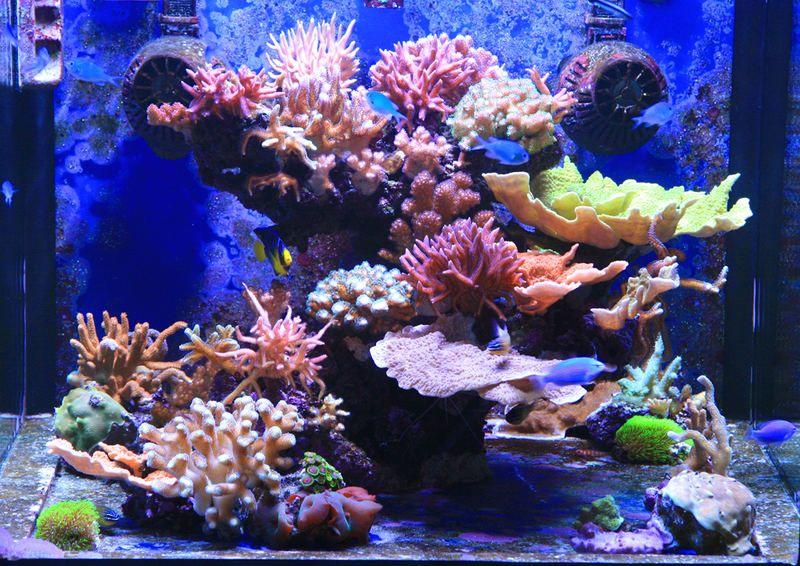 50g Cube Form Thailand Reef Central Online Community Saltwater Aquarium Tanks Aquarium Fish Tank Marine Fish Tanks