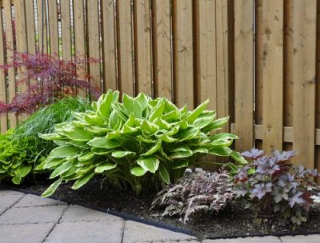 Zone 5 Shade Loving Plants: Choosing Zone 5 Shade Plants ...