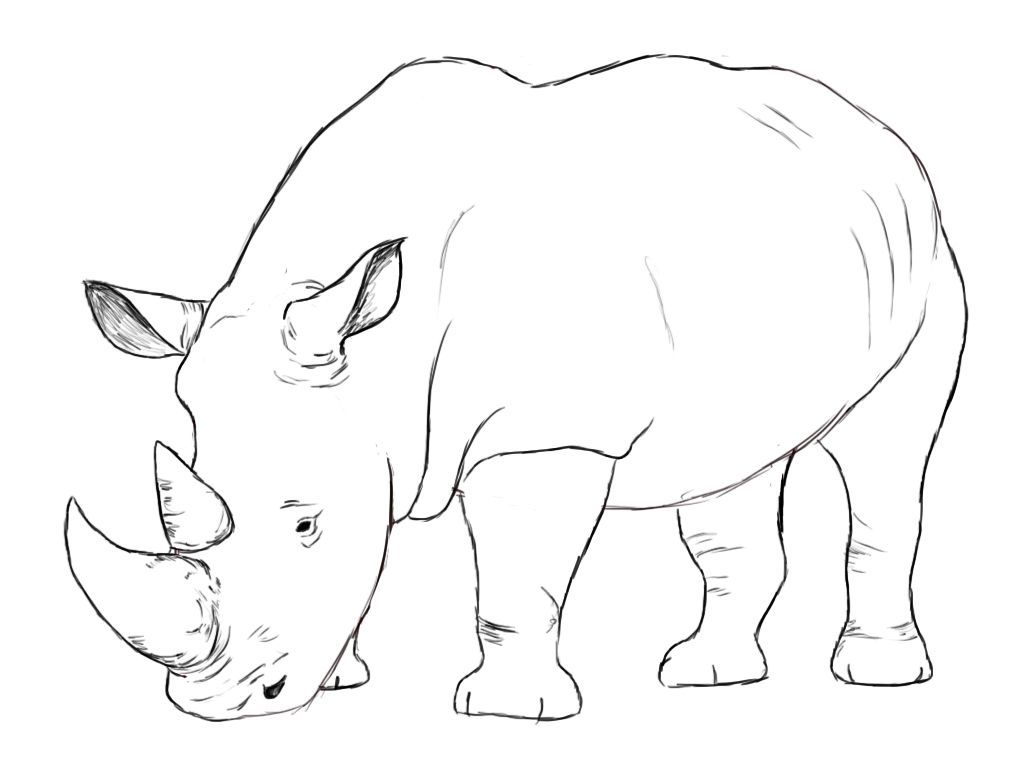 Line Drawings Of Endangered Animals : How to draw a rhino rhinoceros rhinos and tutorials