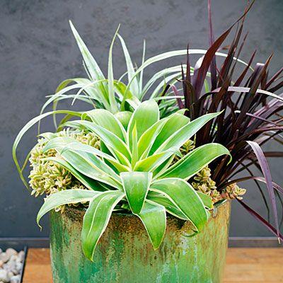 58 cool container gardens zimmerpflanzen - Coole zimmerpflanzen ...
