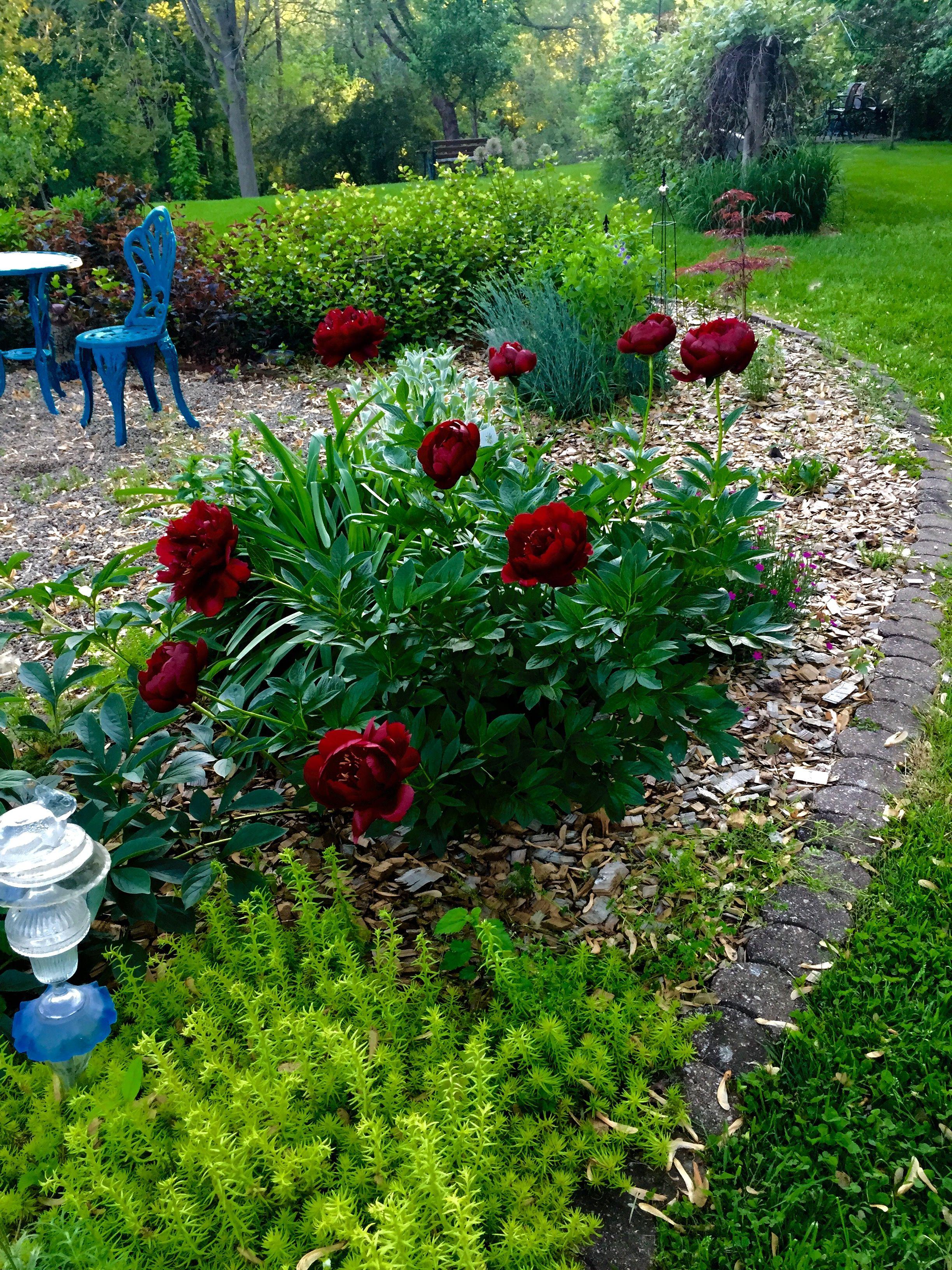 Pin by Regina Walters on garden likes   Outdoor decor ...