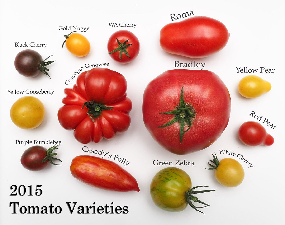 Tomato Varieties Jpg 1200×948 Tomato Stuffed Sweet 640 x 480