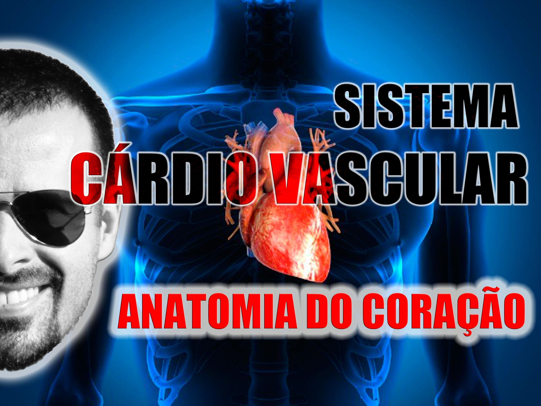Sistema Cardiovascular - Coração: Anatomia, localização e ...