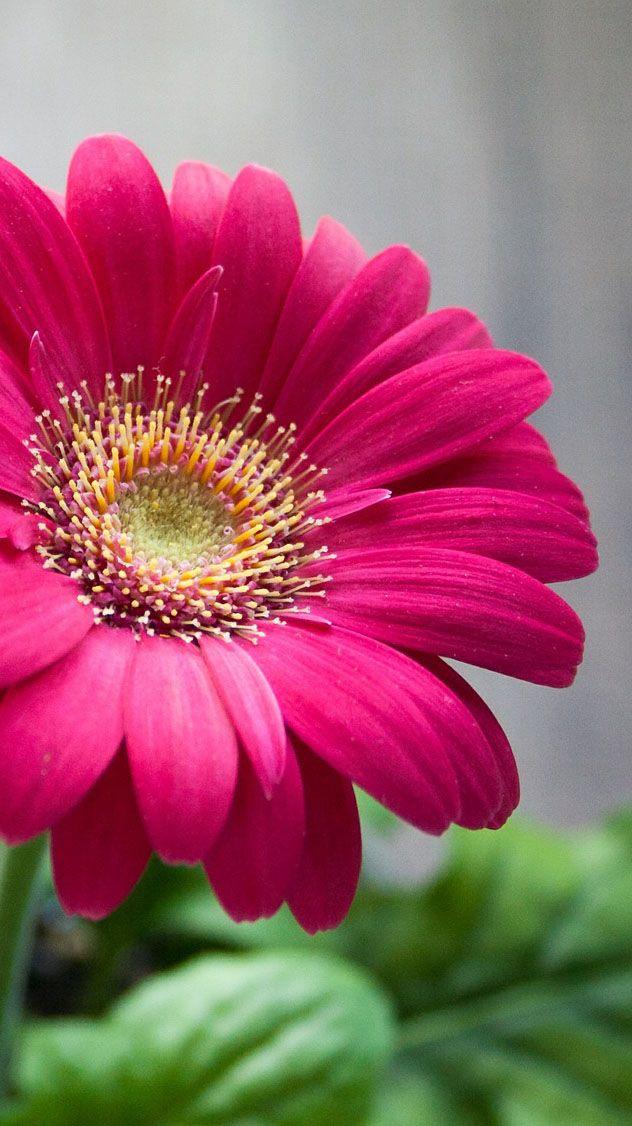 The 35 Best Flower Photos Blumenfotos Blumenbilder Blumen Pflanzen