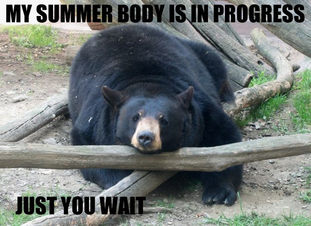 Fitness Quotes Brought To You By Bears Semi Rad Com Black Bear American Black Bear Bear