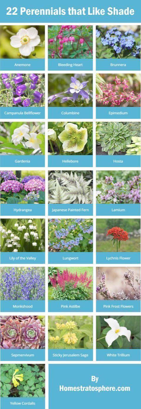 Photo of Beginners Gardeners Gardening for Beginners Republic of Ireland Gardenlands … – Small backyard landscaping – Robert Blog
