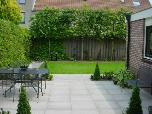 Tuin ideeen leuke leibomen tegen de schutting door inspi tuinkast pinterest gardens and - Tuin ideeen ...