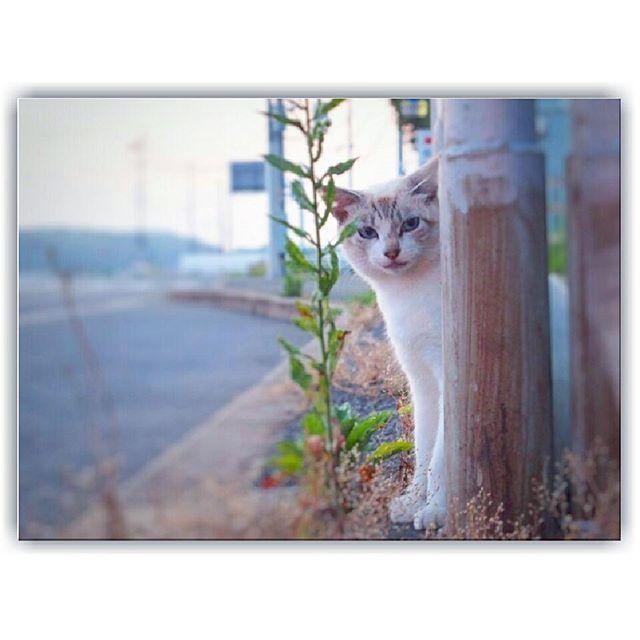 何かを待ってる猫ちゃん*゜ 気付いてくれた(´,,•ω•,,) 福岡