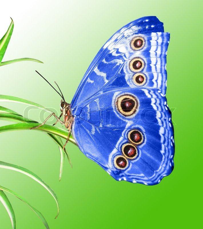 Schönen Schmetterling auf einem grünen ... | Stock Bild | Colourbox