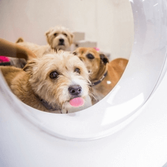 Lort Smith Launches World S Best Practice Adoption Hub Animal