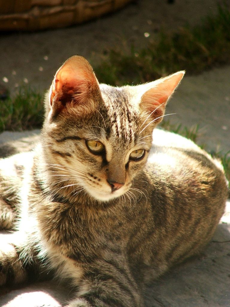 Met a new friend while in Nepal. Sat with me every morning in the hotel's garden. cute cat