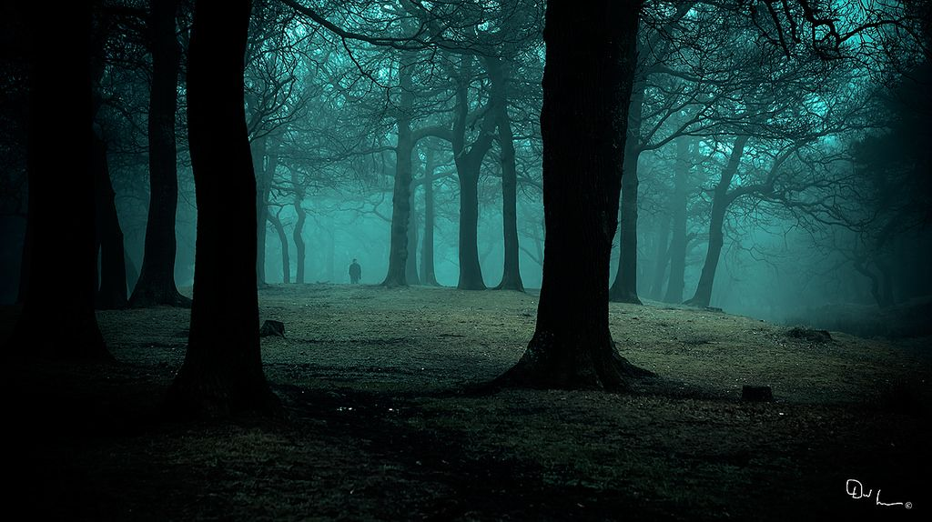 Alone In The Dark Woods With Images