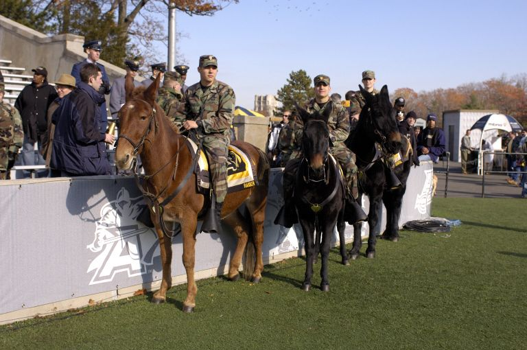 Army Mules These Animals Are So Under Rated I Love Mules Good