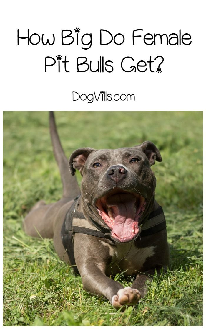 How to Get Papers on Our Pitbull