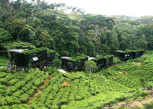 The Rain Forest Eco Lodge Sinharaja Sri Lanka Eco