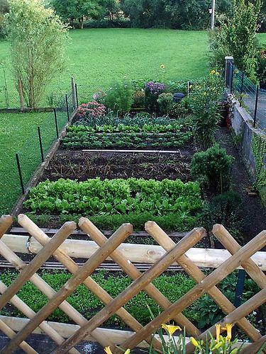 tidy veggie garden