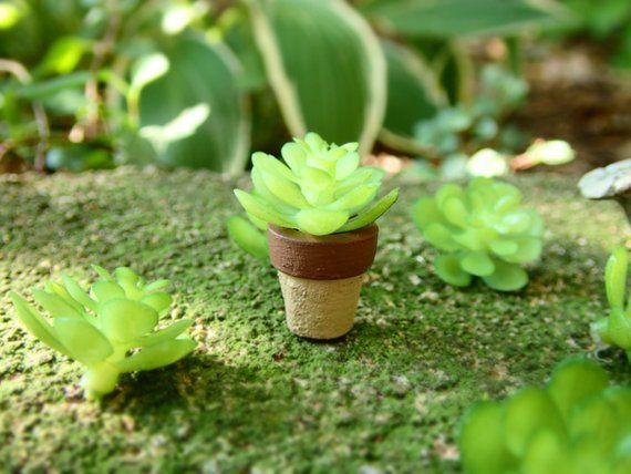 Miniature Dollhouse FAIRY GARDEN Botanical Succulent Accessories
