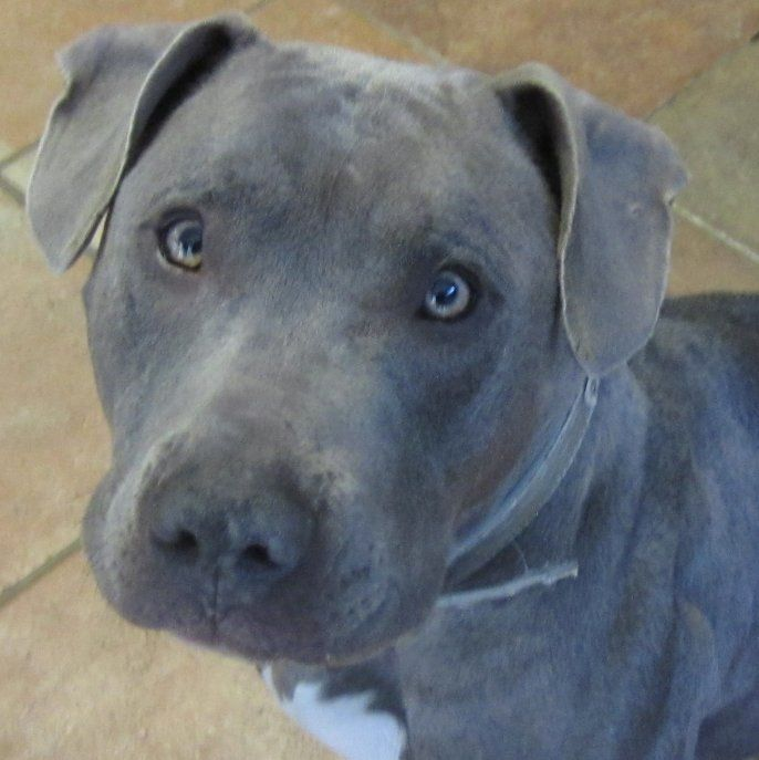 Jellybean has been adopted! February 2015