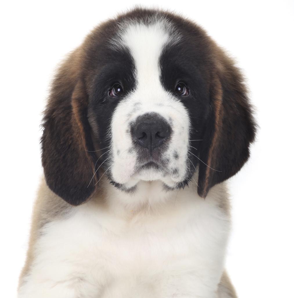 New Dog Dog Training San Jose, Bay Area K9 Trainer Dog