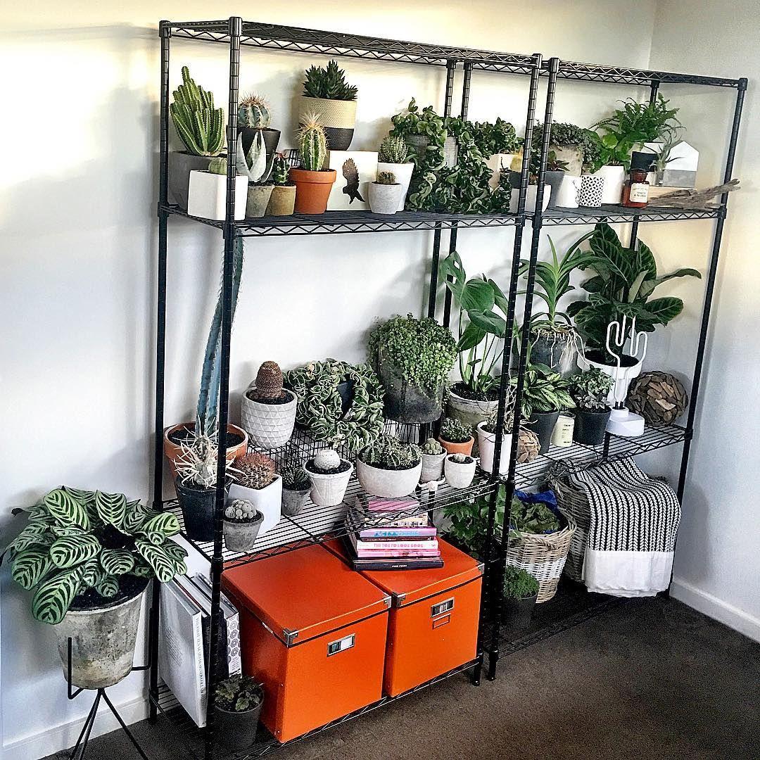 Shelfie Welfie #cactus #cactuslove #succulent #succulove #desert #plant #nature #leaveonlyleaves #leafandclay #jungalowstyle #succulents #flower #flowerlove #garden #plants #instagood #photoftheday #picoftheday #instalike #beautiful #green #cactusrepost #bestoftheday #cactusmovement #cactusclub #cacti #suckerforsucculents #love