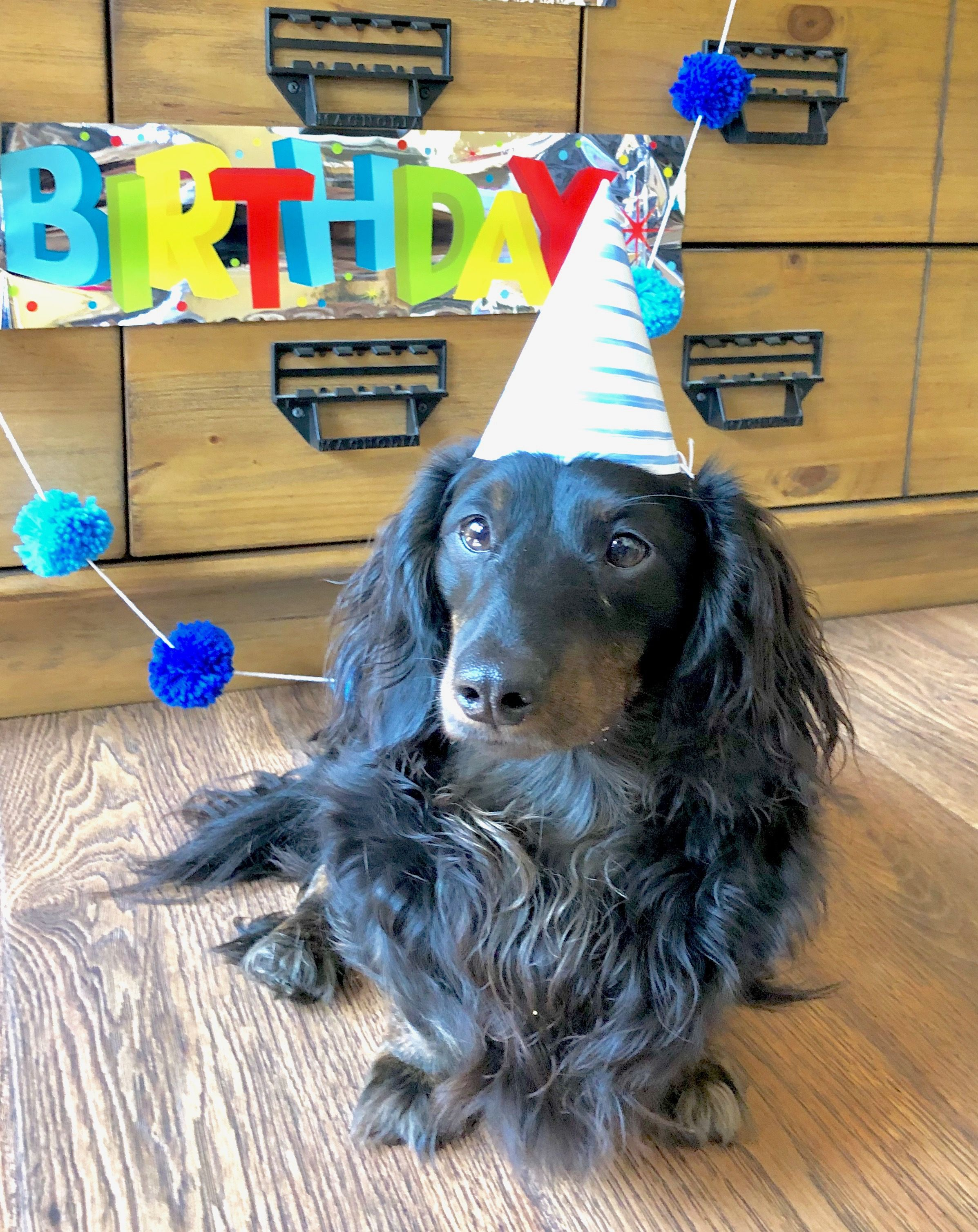 Lincoln S 2nd Birthday Woman Dogs Dogs Mini Dachshund