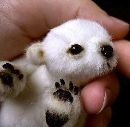 New born polar bear - so cute!