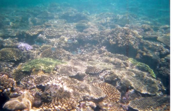 Snorkeling off the Sunabe Seawall in the East China Sea