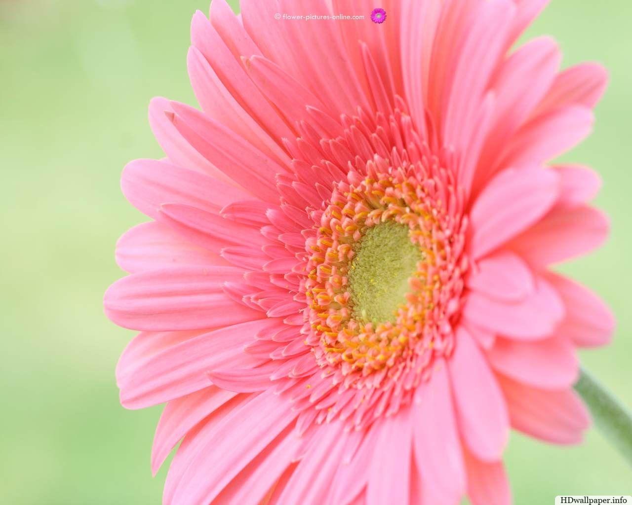 Flower Desktop Wallpapers Httphdwallpaperfoflower Desktop