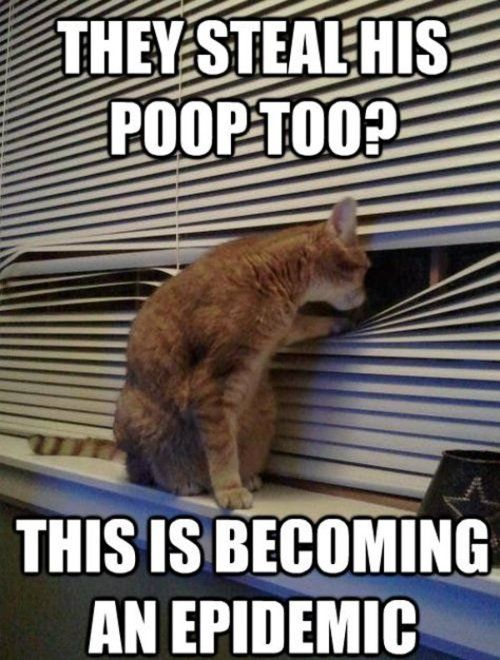 Conspiracy Kitten With Images Funny Cat Pictures Cat Memes