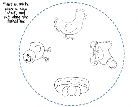 STEM: Life Cycle of a Chicken Wheel Printable http ...
