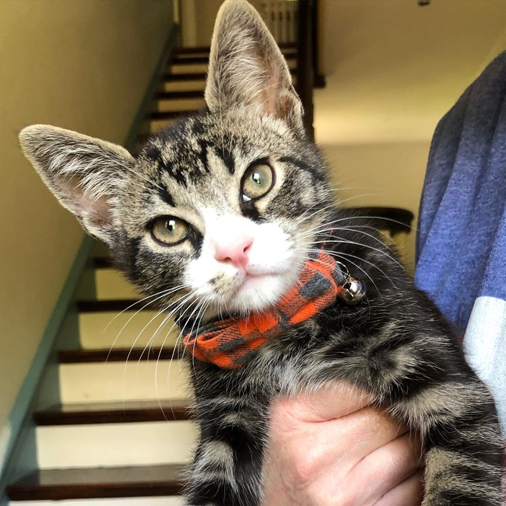 Meet The Adorable Special Needs Kitten Who Survived A Dog Attack