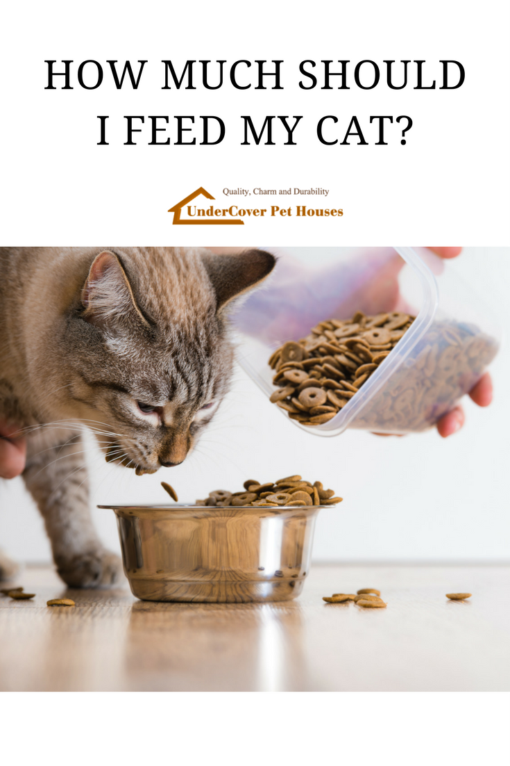 How Much Should I Feed My Cat? Best cat food, Cat