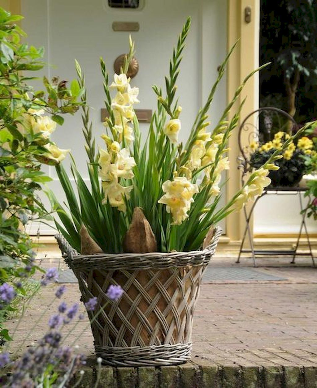 how to plant gladiolus bulbs in pots