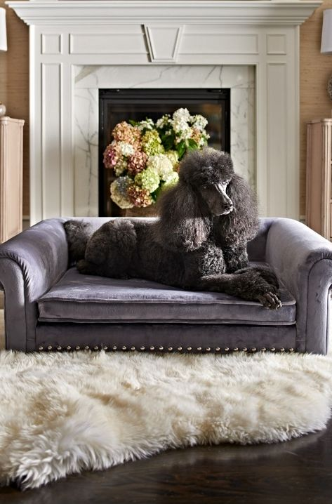 Admirable Fashioned As A Sofa Style Bed The Outlaw Pet Bed Bralicious Painted Fabric Chair Ideas Braliciousco