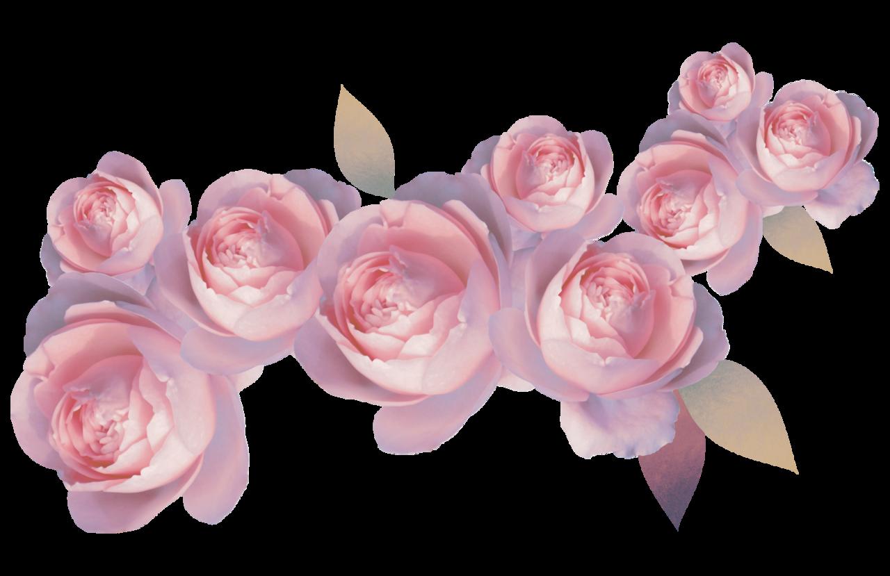 Flower Crown Transparent Gallery Flower Wallpaper Hd