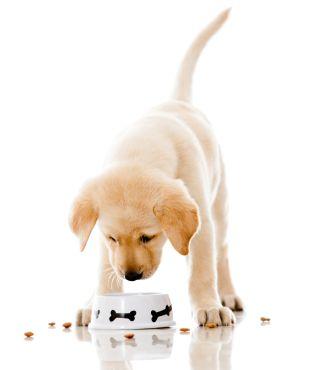 Dog Food And Treats Dog Food Recipes Puppies Best Dog Food