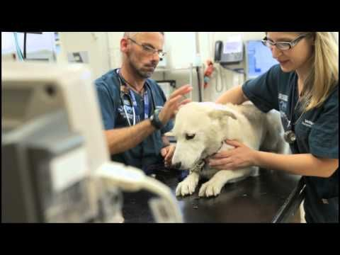 Melbourne Veterinary Hospital Is Teaching Tomorrow S Vets