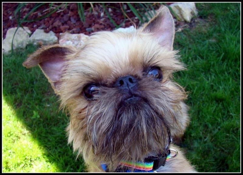 Meet ILLINOIS VOLUNTEERS NEEDED, a Petfinder adoptable