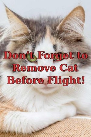 Audrey Dickens Tells About Don't Forget to Remove Cat Before Flight!   #meowpassion  #pets  #catlife  #adoptdontshop  #lovecats  #Choose  #catcondo  #Guide