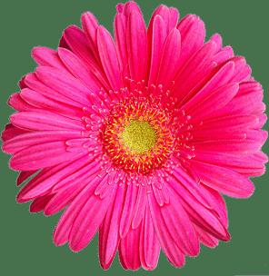 ப லச ப ரமண Wishing You A Happy Diwali In Advance Flower Background Iphone Digital Flowers Photography Wallpaper